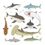 Vector shark different pose set. Royalty Free Stock Images