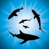 vector sharks underwater and sunlight Royalty Free Stock Image