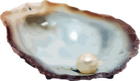 Vector shell with pearl royalty free stock photos