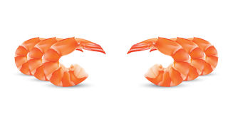 Vector Shrimp Seafood. Prawn illustration  on white background. Shrimp Seafood. Shrimp vector illustration  on white background Stock Photos