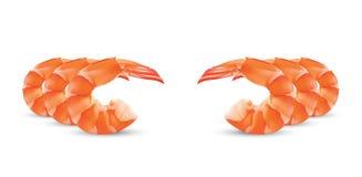 Vector Shrimp Seafood. Prawn illustration  on white background Stock Photos