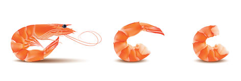 Vector Shrimp, Seafood set. Prawn With head and legs. Illustration isolated on white background Stock Photo