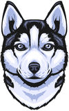 Vector Siberian Husky Stock Photos