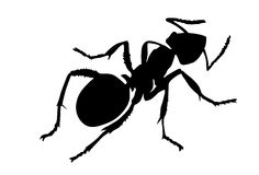 Vector silhouette ant Stock Images