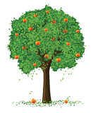 Vector silhouette apple tree Stock Photos