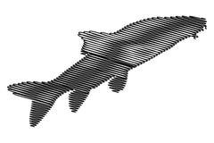 Vector silhouette of Barbel fish. Barbus barbus Stock Image