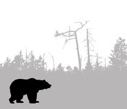 Vector silhouette bear Royalty Free Stock Photography