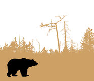 Vector silhouette bear Stock Image