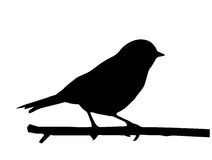 Vector silhouette of the bird royalty free stock image