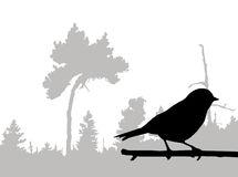 Vector silhouette of the bird Stock Photography