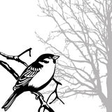 Vector silhouette of the bird Royalty Free Stock Photography