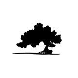 Vector silhouette of bonsai tree. Royalty Free Stock Images