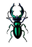 Vector silhouette of the bug Stock Images