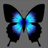 Vector silhouette of butterfly. Royalty Free Stock Photography