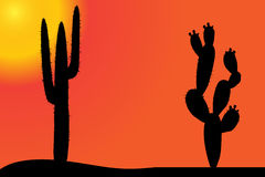 Vector silhouette of cactus. Stock Photo