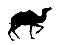 Vector silhouette camel Royalty Free Stock Image