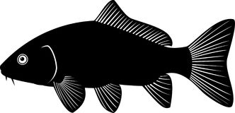 Vector silhouette of Carp. Black and white vector illustration carp Royalty Free Stock Images