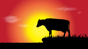 Vector silhouette of cow. Stock Photo