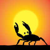 Vector silhouette of the crab. Vector silhouette of the crab at sunset Stock Photography