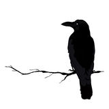 Vector silhouette of a crows in different positions. vector outline. Stock Photography