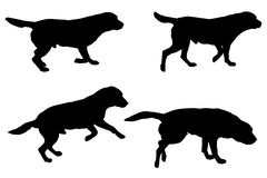 Vector silhouette of a dog. Royalty Free Stock Image