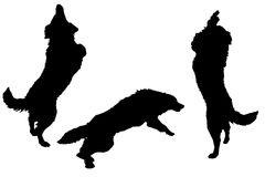 Vector silhouette of a dog. Royalty Free Stock Photo