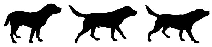 Vector silhouette of a dog. Stock Image