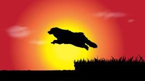 Vector silhouette of dog. Stock Photos