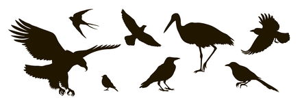 Vector silhouette of eightt birds. Vector silhouette of eight different birds Stock Images