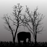 Vector silhouette of elephant. Stock Images