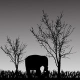 Vector silhouette of elephant. Royalty Free Stock Images