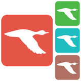 Vector silhouette flying duck Stock Image