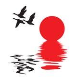 Vector Silhouette Flying Ducks Stock Images