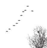 Vector silhouette geese. In sky and crow on tree Stock Images