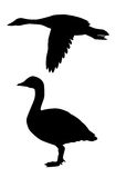 Vector silhouette goose Stock Photos