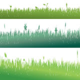 Vector silhouette of grass. Stock Photography