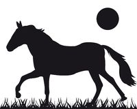 Vector silhouette of the horse Stock Photography