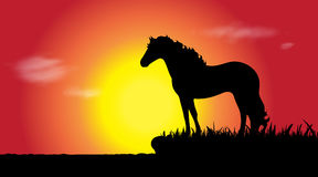 Vector silhouette of horse. Royalty Free Stock Image