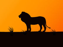 Vector silhouette lion on the background of sunset Stock Image