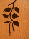 Vector Silhouette Of The Branch Of The Birch Royalty Free Stock Photo