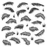 Vector silhouette palm leaves set  Royalty Free Stock Photography