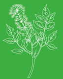 Vector silhouette of the plant royalty free illustration