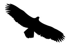 Vector silhouette of the ravenous bird Royalty Free Stock Photos
