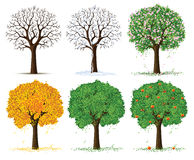 Vector silhouette season trees. Vector silhouette of autumn, spring, summer and winter season tree isolated on the white background Stock Photo