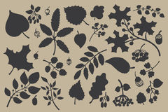Vector silhouette set  with leaves,branches, Royalty Free Stock Photo