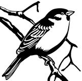 Vector silhouette sparrow. On white background Royalty Free Stock Photos