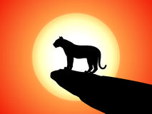 Vector silhouette tiger standing on rock on sunset Stock Photos