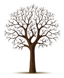 Vector silhouette tree crone. Vector silhouette of tree branches cron isolated on the white background Stock Photo