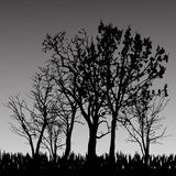 Vector silhouette of tree. Royalty Free Stock Photos