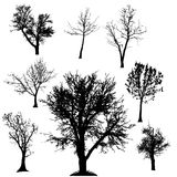 Vector silhouette of tree. Royalty Free Stock Photography